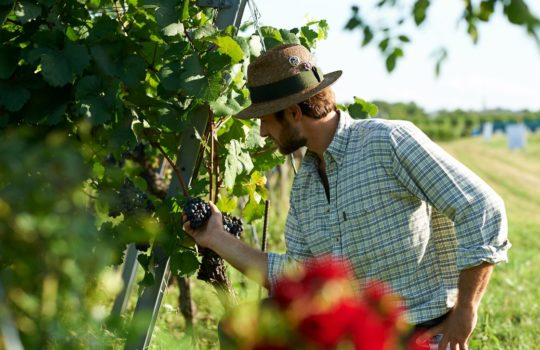 Weinbau, Land- und Forstwirtschaft