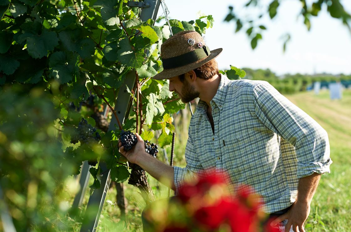 Winegrower and agriculturalis