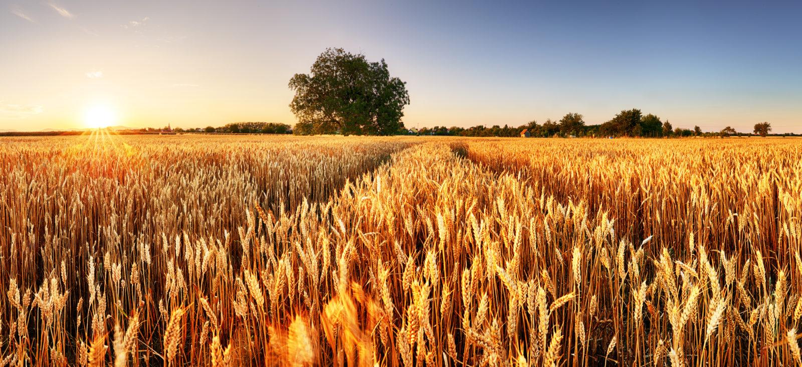 Investitionsprämie – spezielle Fragestellungen zu Land- und Forstwirtschaft