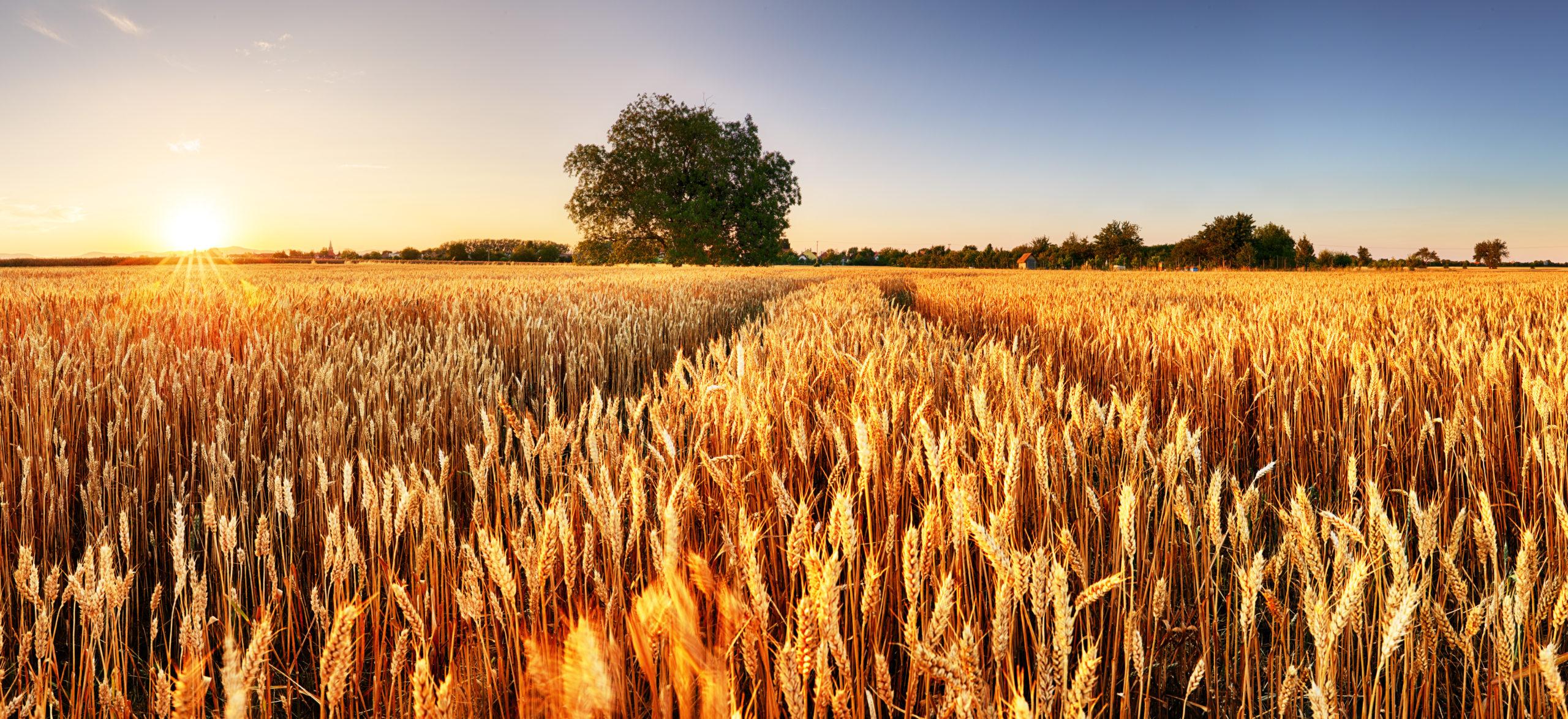 Corona Blog: Investitionsprämie – spezielle Fragestellungen zu Land- und Forstwirtschaft - 26.11.2020