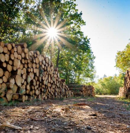 Land- und Forstwirtschafts-Pauschalierungsverordnung - 21.7.2021